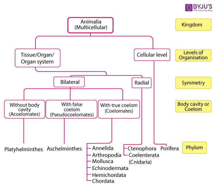 Animal Kingdom Concept Map