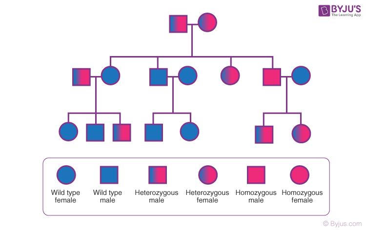 Pedigree Analysis
